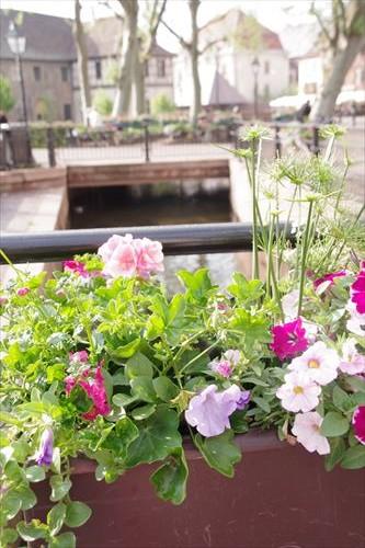 mini 花と川