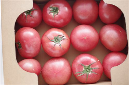 tomate001